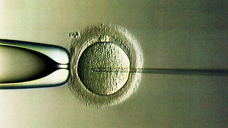 Befruchtung.jpg