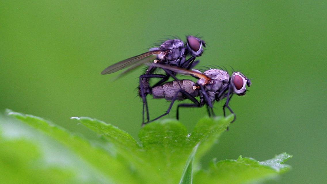 Milben Spinnen Kleidermotten Krabbeltiere Die Auch In Wohnungen