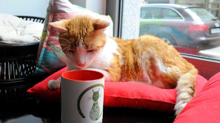 Katzen-Café.jpg