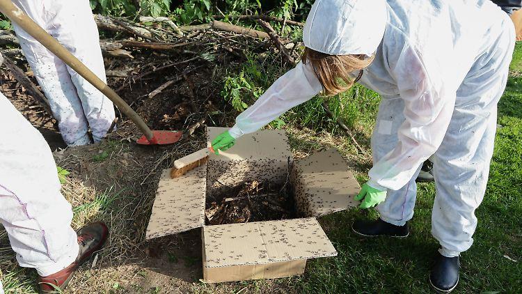 kreide thymian und zitrone das hilft gegen ameisen im haus n