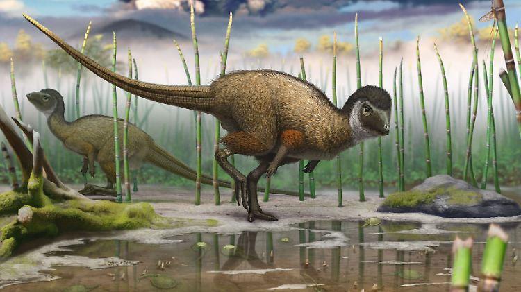 dinosaureier federn.jpg