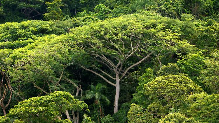 amazonas regenwald.jpg