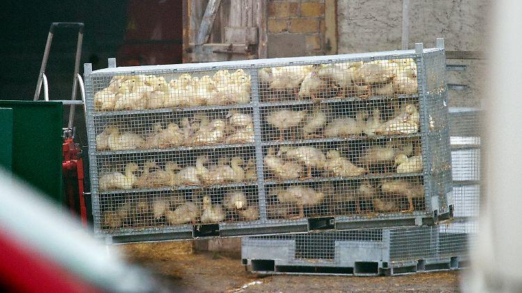 vogelgrippe2.jpg