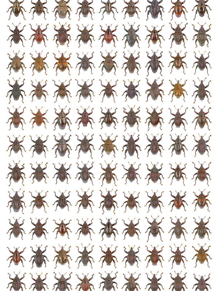 Benennen Bevor Sie Aussterben 98 Unbekannte Käferarten Gefunden
