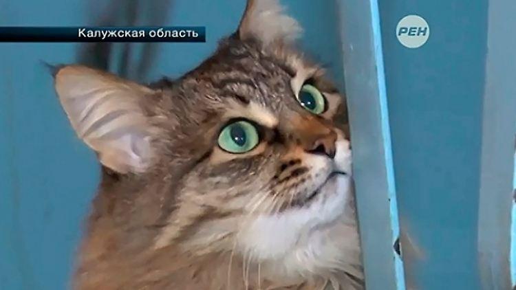 PETA-Auszeichnung für Lebensretterin Katze Mascha! Mascha