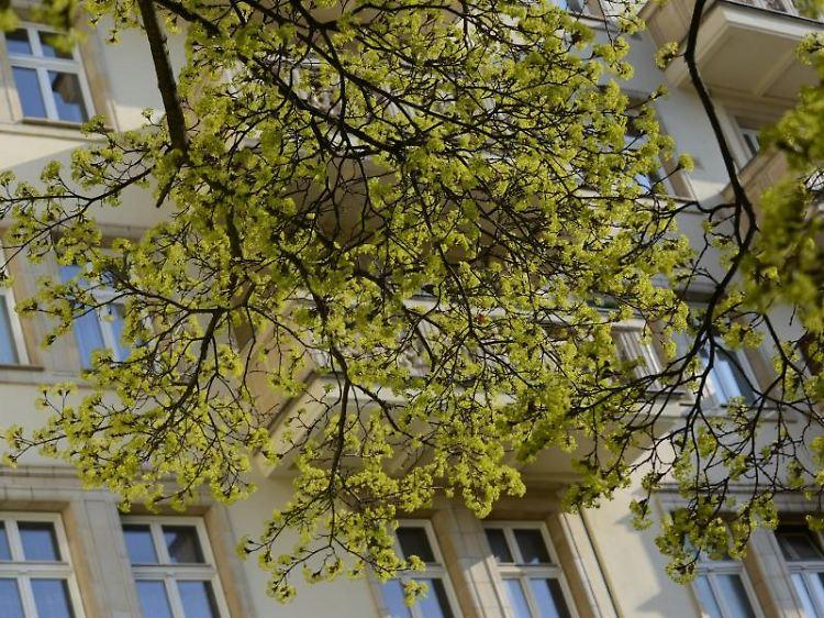 Rechte Von Hausbesitzern Wenn Der Baum Vom Nachbarn Nervt N Tv De