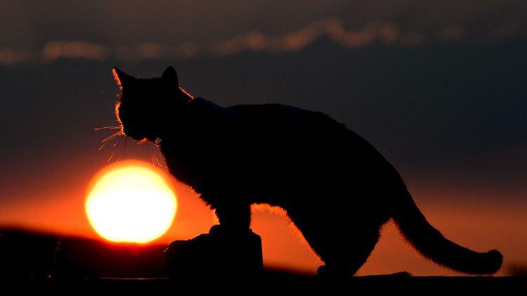0f56ea90656149 ... will zwei Millionen Katzen töten. 58142149.jpg. Katzen kamen im 17.  Jahrhundert mit den Siedlern nach Australien - nun bedrohen sie  einheimische Arten.