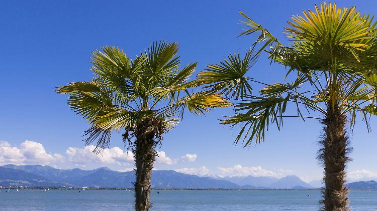 Einwanderung Exotischer Arten Palmen Konnten Bald In Deutschland