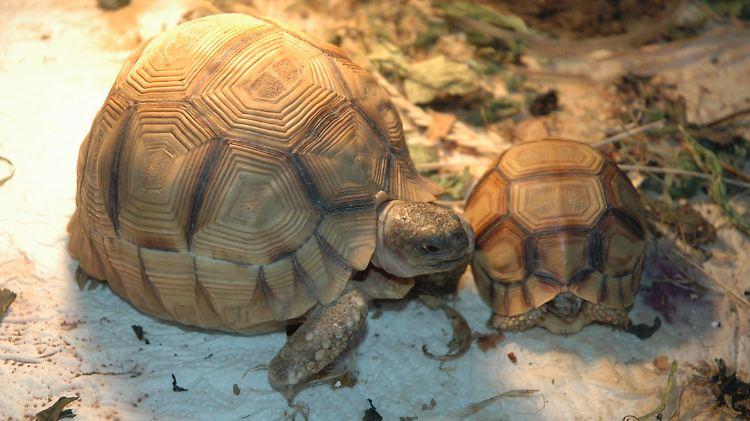 Razzien In Rheinland Pfalz Und Bayern Wertvolle Schildkröten