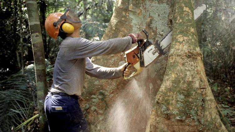 Abholzung am Amazonas:Jedes Jahr verschwinden 13 Millionen Hektar Wald – das entspricht in etwa der Fläche Griechenlands.jpg