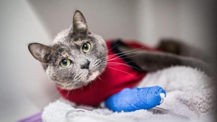 Die Bahndlungskosten beim Tierarzt für eine kranke Katze können die Haushaltskasse durchaus belasten. Eine spezielle Versicherung lohnt aber trotzdem nicht in jedem Fall. Foto: Frank Rumpenhorst