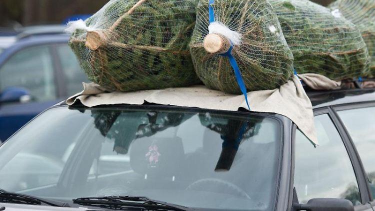 Wer seinen Weihnachtsbaum auf dem Autodach transportieren will, sollte ihn mit Spanngurten sichern. Foto: Patrick Pleul