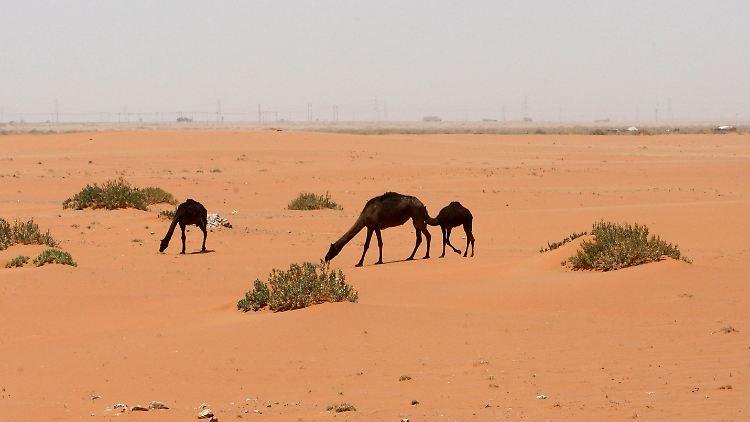 Wüstenöl.jpg