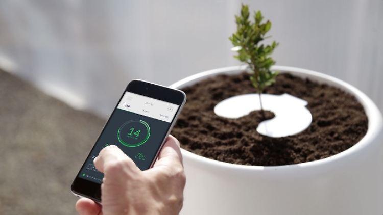 Bios Incube Mit Smartphone App Bio Urne Macht Asche Zu Pflanzen N