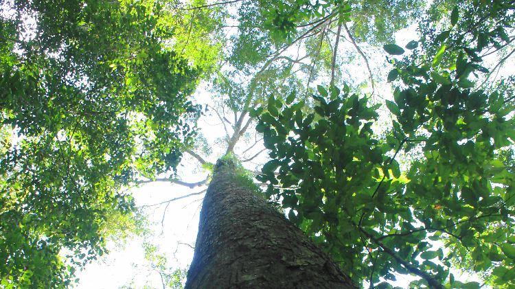 tropenbaum.jpg