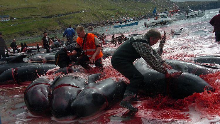 Wale werden seit Menschengedenken abgeschlachtet.jpg