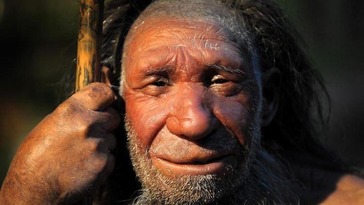Nachbildung eines Neandertalers im Neanderthal-Museum in Mettmann.jpg