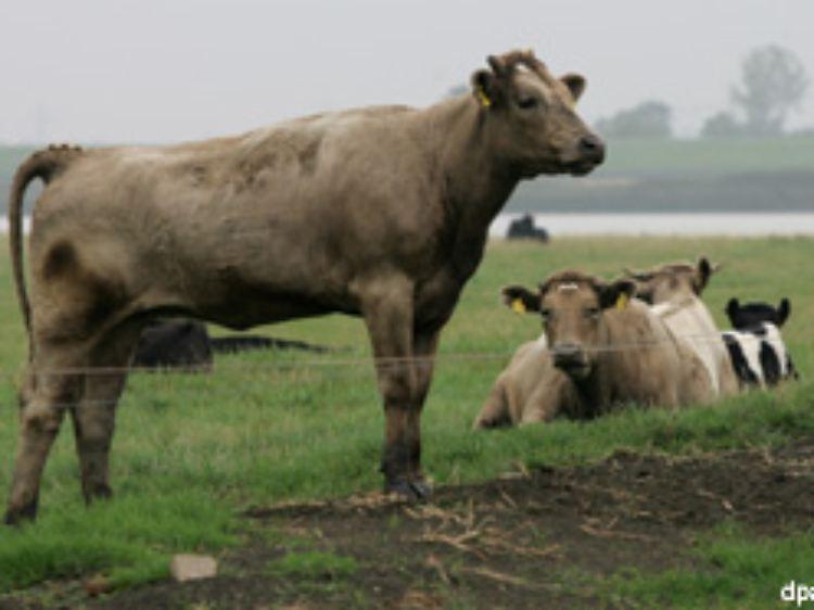 Nord Sud Schlafer Kuhe Folgen Magnetismus N Tv De