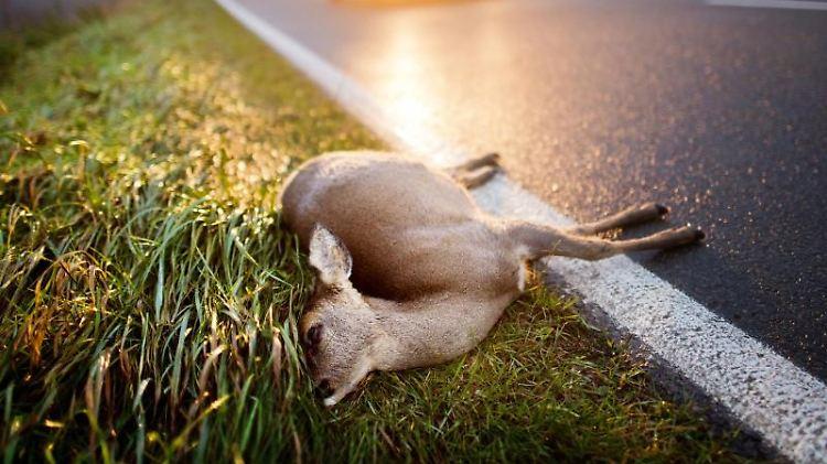 Autofahrer, die nach der Zeitumstellung in der Abenddämmerung von der Arbeit kommen, müssen mit Wildwechsel rechnen. Foto: Julian Stratenschulte
