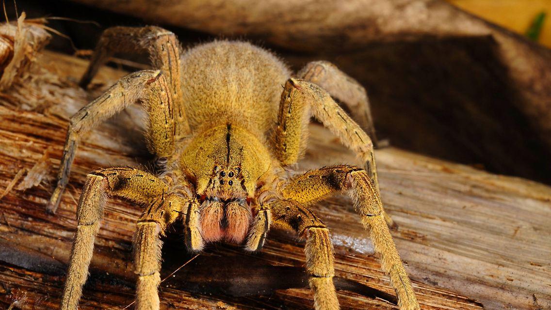 Sterben spinnen im staubsauger | Sterben Insekten und ...