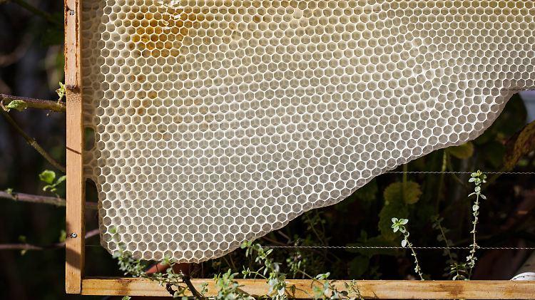 Bienenwabe.jpg
