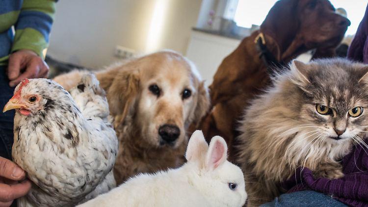 Frage Antwort Nr 494 Schaden Haustiere Der Umwelt N Tv De