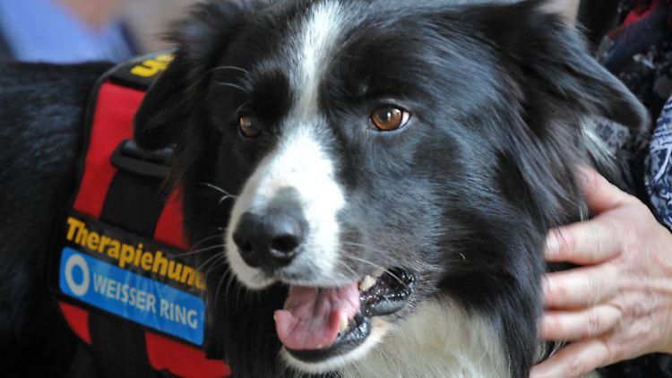 Er ist kommunikationsfreudig und besitzt einen ausgeprägten Spieltrieb - der Therapiehund