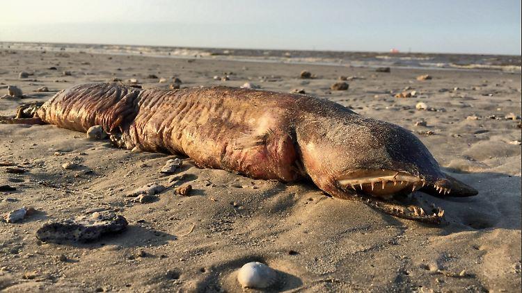 Sea creature.PNG