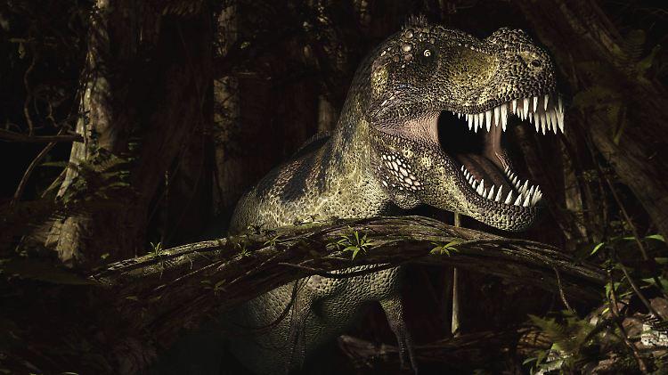 Frage Antwort Nr 503 Gibt Es Noch Dinosaurier N Tvde