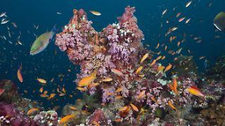 korallen4.jpg