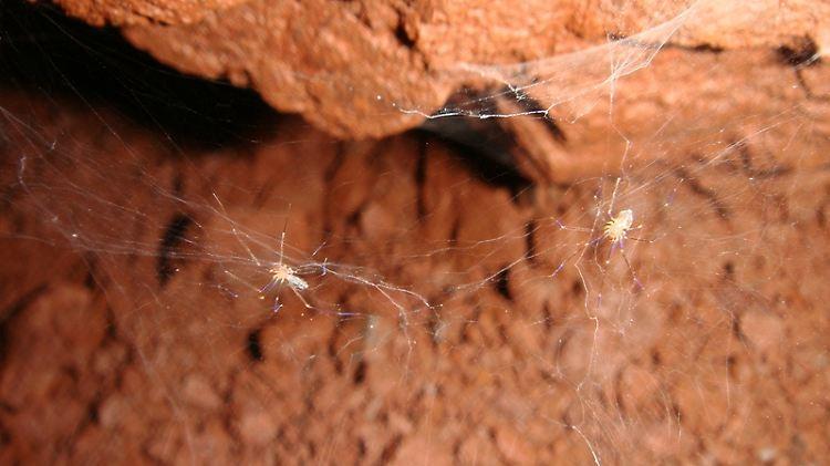 Spinennnetz.jpg