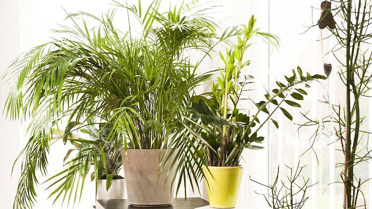 Frage & Antwort: Sind Pflanzen im Schlafzimmer schädlich ...