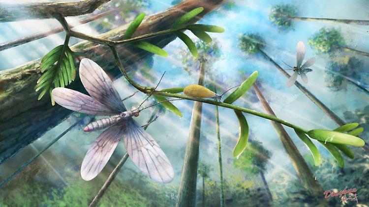 VERWENDUNG NUR IN ZUSAMMENHANG MIT DER STUDIE_Schmetterlingsvorläufer aus der Kreidezeit.jpg