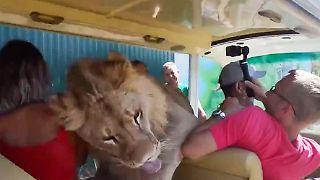 Löwe Touristen-Bus.JPG