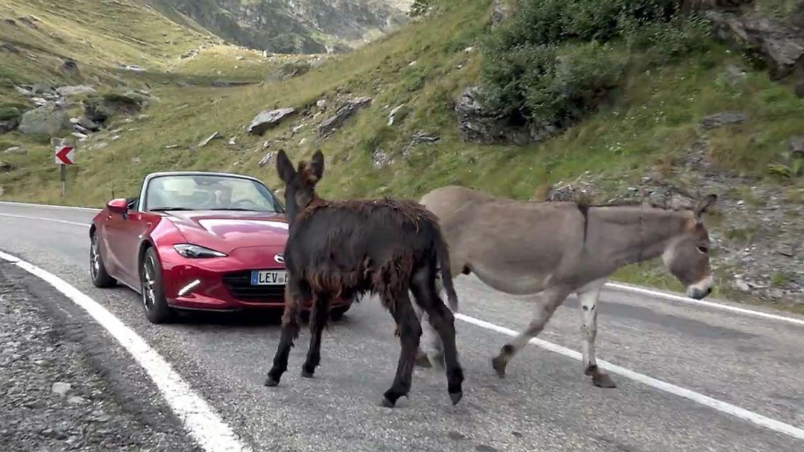 Neue Modelle Vom Aussenseiter Mazda Mag Es Eigenwillig N Tv De