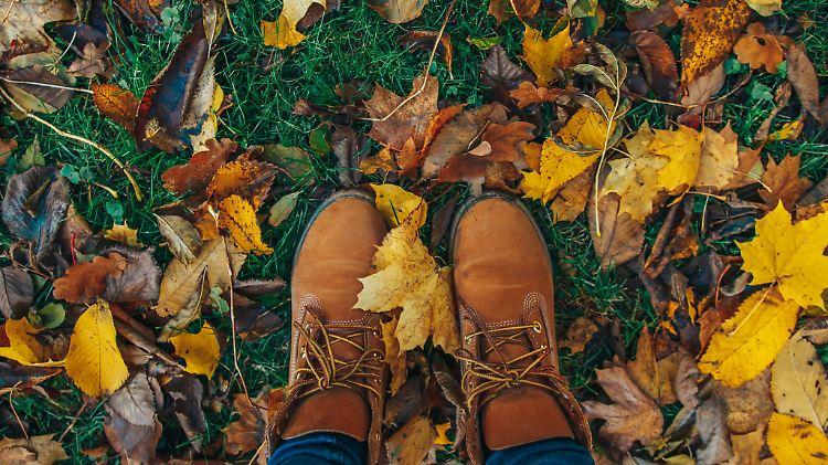Wohin Mit Den Blättern Der Richtige Umgang Mit Laub Im Garten N