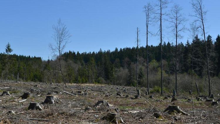 Eine Rodung, in der ein Moor entstehen soll, ist im Nationalpark Hunsrück zu sehen. Foto:Harald Tittel/Archiv