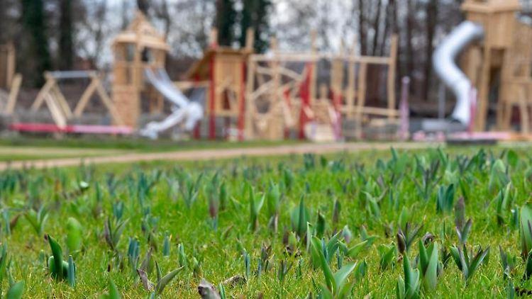 Junge Tulpen wachsen auf dem Gelände der Landesgartenschau, während im Hintergrund ein Spielplatz zu sehen ist. Foto: Monika Skolimowska/Archiv