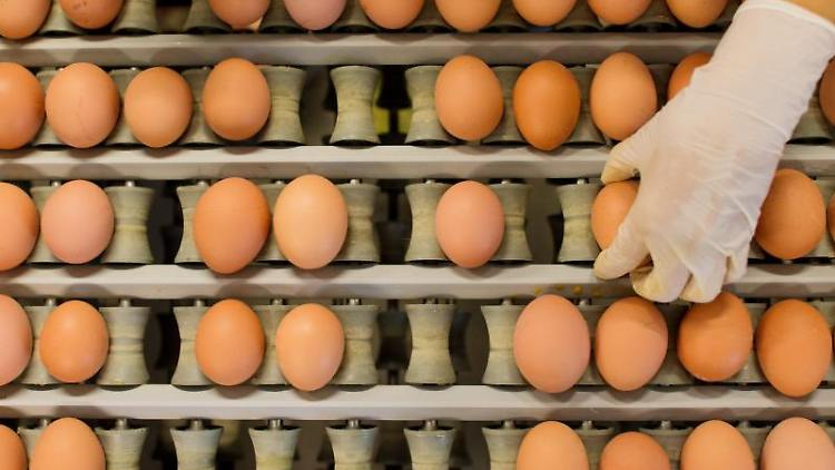 Eier werden in einem Betrieb für die Produktion von Eiern aus Freilandhaltung abgepackt. Foto: Julian Stratenschulte/Archivbild