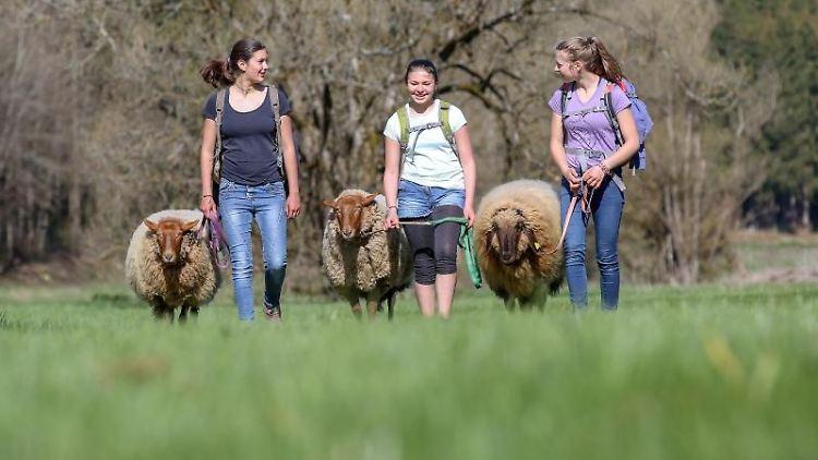 Clara, Emely und Annika (l-r) wandern zusammen mit den Schafen am Ostersonntag durch das Fehlatal. Foto: Thomas Warnack