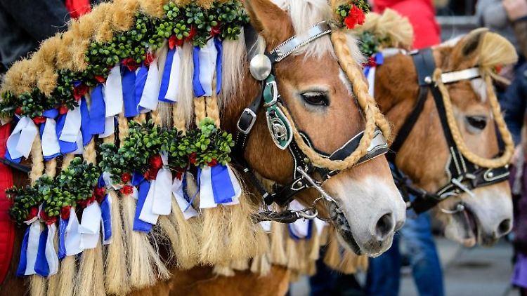 Geschmückte Pferde beim traditionellen Georgiritt. Foto: Matthias Balk/Archivbild