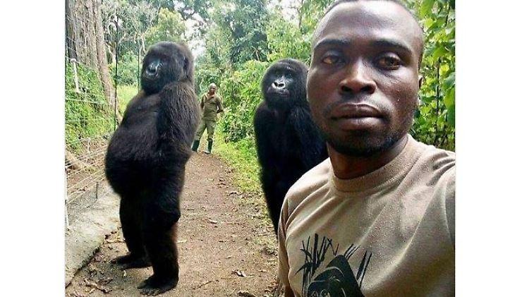 Gorilla-Selfie.JPG