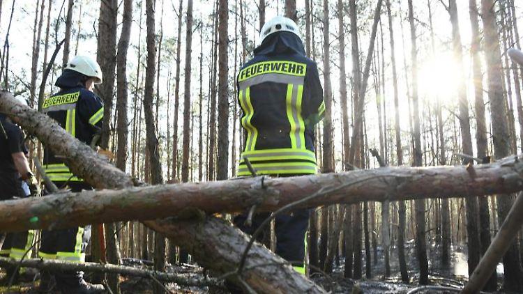 In einem Waldgebiet stehen Einsatzkräfte der Feuerwehr. Foto: Julian Stähle/Archiv