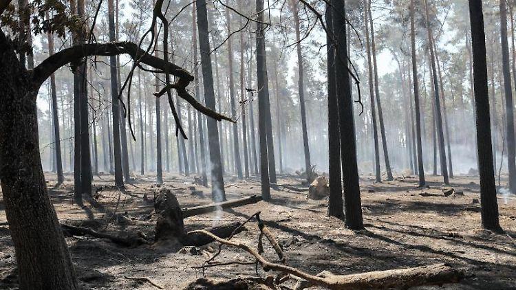 Letzte Brandnester qualmen noch nach einem Waldbrand in Sachsen-Anhalt. Foto: Jan Woitas/Archivbild