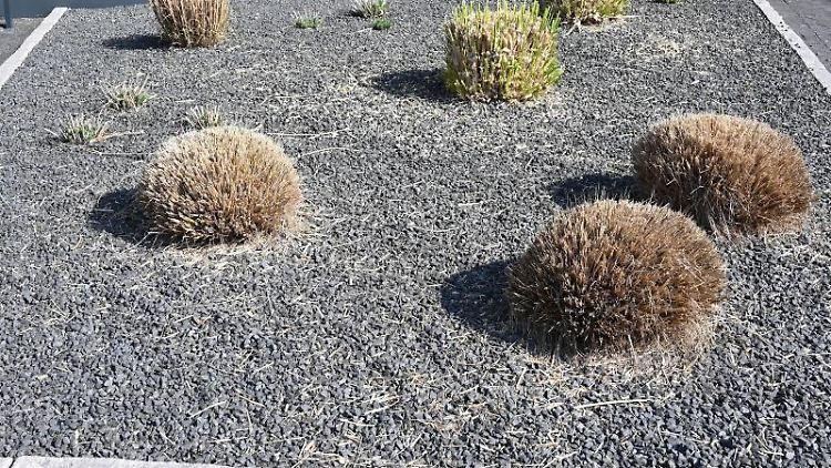 Pflanzen ragen aus einem Vorgarten mit grauen und schwarzen Kieselsteinen. Foto: Carmen Jaspersen/Archiv