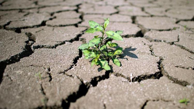 In einem ausgetrockneten Flussbett wächst eine kleine Pflanze in den Rissen der trockenen Erde. Foto: Arno Burgi/Archivbild