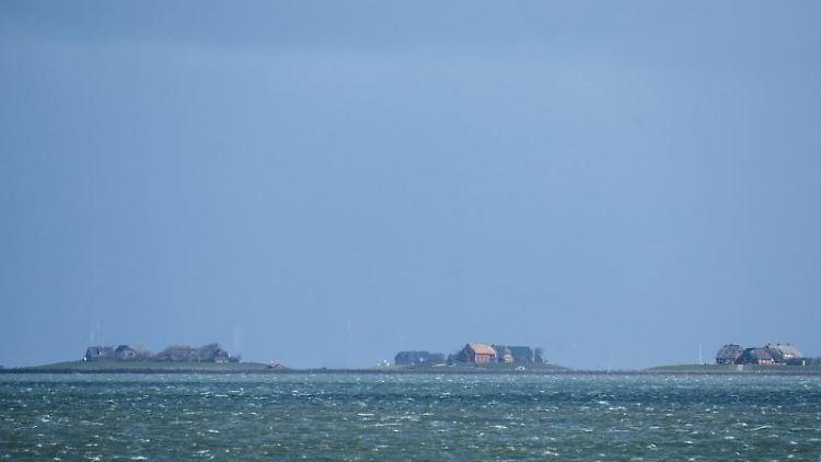 Häuser auf Warften ragen auf der Hallig Langeneß optisch aus der Nordsee heraus. Foto: Daniel Bockwoldt/Archivbild