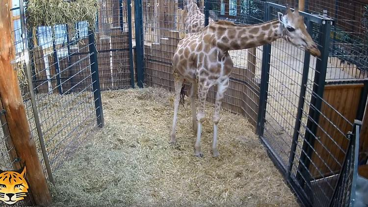 Screenshot Zoo Magdeburg.JPG