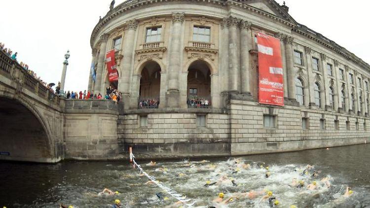 Rund 80 Schwimmer starten beim Berliner Flussbad Pokal am Bode-Museum. Foto: Jörg Carstensen/Archivbild