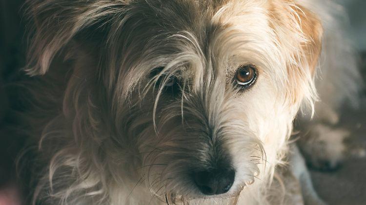 Das Rätsel um den Hundeblick ist gelöst